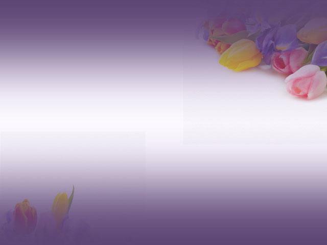 紫色ppt背景 一组紫色郁金香ppt背景图片下载